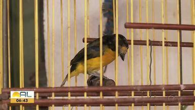Criar animais silvestres sem autorização é crime - Batalhão Ambiental fala sobre penalidades para pessoas flagradas neste tipo de crime.