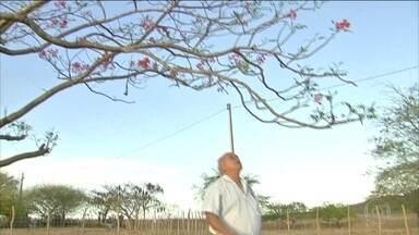 Profetas do tempo observam a natureza para saber se vai chover - Agricultores acreditam que nos próximos meses a chuva chega ao sertão do Nordeste
