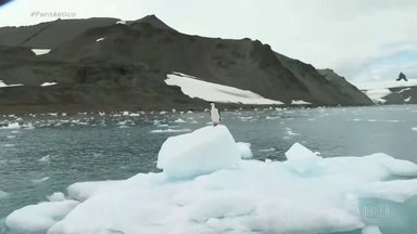 Brasil vai reinaugurar estação de pesquisa na Antártica após incêndio - O Brasil vai reinaugurar, esta semana, a estação de pesquisa na Antártica. A base tinha sido destruída por um incêndio, em 2012.