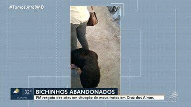 Polícia Militar resgata dez cachorros em situação de maus tratos em Cruz das Almas - Ação aconteceu por meio de uma denúncia.