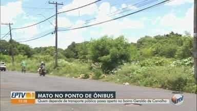"""Usuário reclama de mato alto em ponto de ônibus em Ribeirão Preto - Problema é destaque no quadro """"Até Quando?"""" desde dezembro."""