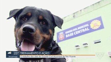 Parceria entre cães e guarda civis vão além do trabalho - Quando se aposentam, muitos cãezinhos são adotados pelos guardas.