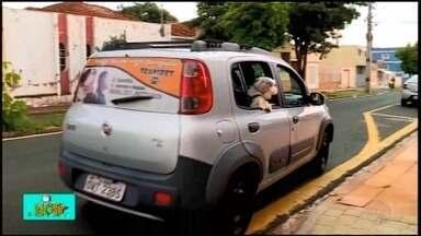 Motorista de aplicativo cria transporte especial para animais - No Quadro 'TV Bicho', confira o veículo de Uberaba que leva os bichinhos para vacinação, banho e outras atividades.