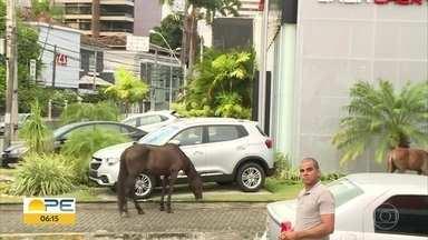 Cavalos são flagrados soltos em rua de Casa Forte - Animais andavam tranquilamente na esquina da Avenida Dezessete de Agosto.