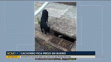 Cachorro fica preso dentro de bueiro - Animal foi encontrado em uma rua de Ponta Grossa