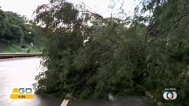 Parte de árvore cai sobre fios de energia, em Goiânia - Galhos bloquearam parte da pista.