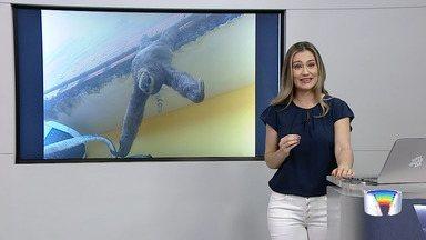Bicho-preguiça é resgatado do telhado de uma casa em Caraguá - Animal foi encontrado pela moradora da casa no bairro Olaria na tarde de sábado (25). A preguiça foi resgatada e liberada para a natureza.