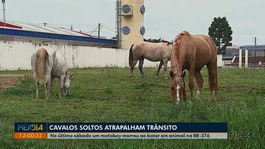 Cavalos soltos atrapalham trânsito em Ponta Grossa - Motociclista morreu após bater em animal na BR-376.