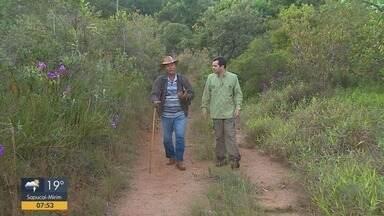 Terra da Gente mostra presença de onças-pardas na natureza - Encontro é mais comum nas áreas rurais