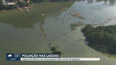 Lagoas da Barra da Tijuca e Jacarepaguá estão cheias de gigogas - As plantas aquáticas estão espalhadas em vários pontos e segundo especialistas elas se proliferam com nutrientes que vem do esgoto.