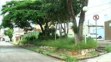 Matagal toma conta de praça na Vila Progresso em Jundiaí - Em Jundiaí (SP), os moradores da Vila Progresso queriam que a Praça Primavera tivesse as flores e as árvores bem cuidadas, mas o matagal já tomou conta.