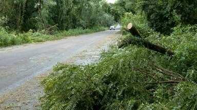 Temporal deixa estragos em cidades da Região Norte - Em Chiapetta, mais de 500 hectares de soja foram danificados.