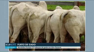 Em Alto Paraná, 23 cabeças de gado foram furtadas de propriedade rural - O dono conseguiu recuperar 8 animais que estavam na região.