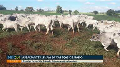 Bandidos roubam gado e caminhão de propriedades rurais no noroeste - Em uma das propriedades, 30 cabeças de gado foram levadas.