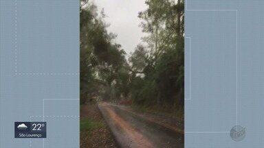 Deslizamento de terra e queda de eucalipto interditam trecho da BR-459, em MG - Deslizamento de terra e queda de eucalipto interditam trecho da BR-459, em MG