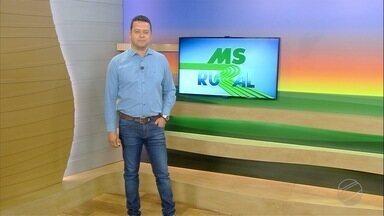 MS Rural - edição de domingo, 09/02/2020 - MS Rural - edição de domingo, 09/02/2020