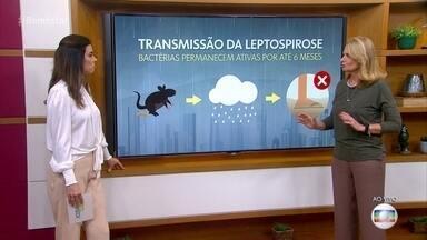 Leptospirose é um dos perigos durante as enchentes - Bactéria pode sobreviver no meio ambiente até por seis mess depois do alagamento. Médico conta que objetos e até mesmo a pele íntegra pode ser contaminada pela leptospira