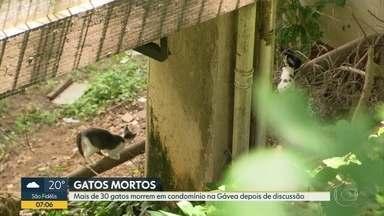 Polícia investiga morte de mais de 30 gatos em condomínio na Gávea - Mais de trinta gatos apareceram mortos em um condomínio na Gávea após a discussão de vizinhos por causa da permanência dos animais. A Polícia está investigando o caso.