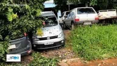 Após chuva, árvore cai e atinge três carros, em Goiânia - Ninguém se feriu.