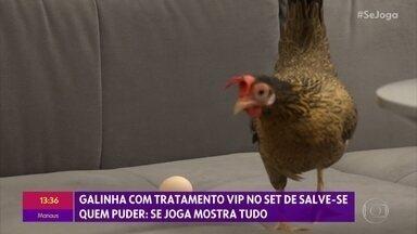 Veja como são feitas as gravações com a galinha Filipa - Aves ganham tratamento vip no set da novela 'Salve-se Quem Puder'