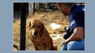 Cão permanece ao lado do corpo do dono após seu falecimento - A história ganhou grande repercussão nas redes sociais.