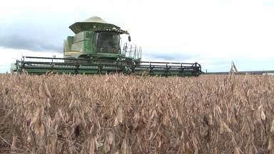 G1 no campo: município baiano lidera ranking nacional da produção agrícola - O município de São Desidério, no oeste baiano, alcançou o valor de R$ 3,6 bilhões em 2018, alta de 54% em relação ao ano anterior.