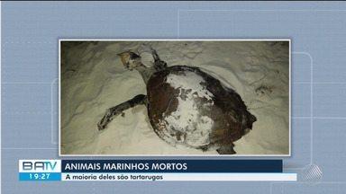 Vinte e cinco tartarugas foram encontradas mortas desde o começo do ano no sul da BA - A principal causa de morte desses animais está relacionada com instrumentos de pesca.