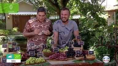 Murilo Soares mostra curiosidades sobre as uvas - O engenheiro florestal ainda ensina a cultivar uva em casa