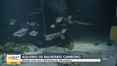 Aquário em Balneário Camboriú reúne mais de 1,5 mil peixes - Aquário em Balneário Camboriú reúne mais de 1,5 mil peixes