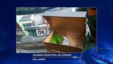 Caixa com filhotes de maritacas é encontrada em terreno de Jundiaí - Uma caixa com dois filhotes de maritacas foi encontrada em um terreno no bairro Eloy Chaves, em Jundiaí (SP).