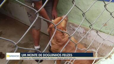 Projeto em Petrópolis resgata cães e oferece para adoção - Confira na reportagem de Lucas Machado e Rogério de Paula.