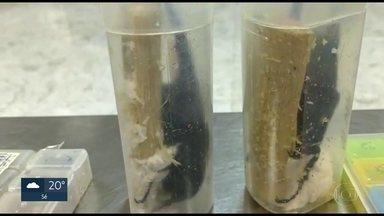 Besouros achados em mala de passageiro serão entregues para a USP - Os insetos estavam vivos em embalagens dentro da mala de um passageiro japonês que tentou embarcar para a Tailândia. Os animais foram recolhidos por fiscais do IBAMA e serão entregues para o Museu de Zoologia da USP.