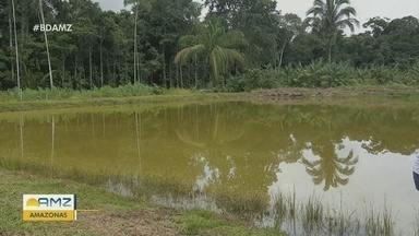 Projeto estimula criação de peixes em Manacapuru, no AM - Atividade é alternativa de renda no município.