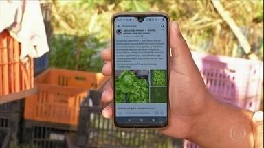 Delivery de hortaliças vira alternativa para manter renda de agricultores no interior de S - Isolamento social fez com que os produtores precisassem inovar para manter a atividade em funcionamento.
