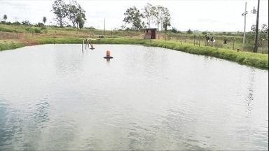 Venda de peixes decepciona produtores do interior de SP - Nem mesmo o período de Quaresma garantiu aumento na procura pelo produto.
