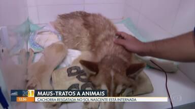 Ongs protetoras dos animais alertam que maus-tratos podem aumentar durante a pandemia - Nesta terça-feira (14) uma cadela foi encontrada no lixo dentro de uma sacola plástica fechada no Sol Nascente. Ela foi resgatada e se recupera em uma clínica veterinária de Ceilândia.
