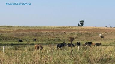 Produtores rurais pedem auxílio de polícias para combater o roubo de animais - Dados oficiais apontam redução dos crimes.