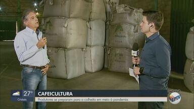 Produtores se preparam para colheita de café em meio à pandemia - Veja o que deve mudar no Sul de Minas