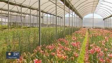 Crise do coronavírus prejudica produções de flores no Sul de MG - Parte da produção teve que ir pro lixo