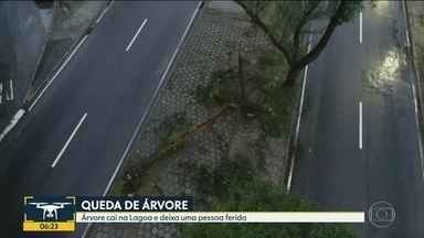 Frente fria chega ao Rio - Ventania derruva árvore na zona sul