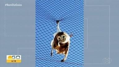 Coruja fica presa em tela de quadra de esportes em Catalão - Corpo de Bombeiros conseguiu resgatar a ave sem ferimentos.