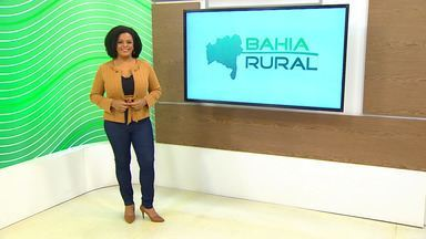 Bahia Rural Assista Online No Globoplay