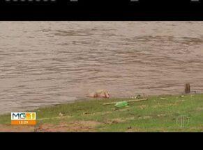 Corpo boiando é encontrado em rio de Governador Valadares - Cadáver foi localizado na região do bairro São Tarcísio.