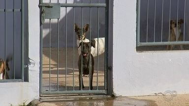 Taxa de abandono de animais cresce 40% em Itapetininga - O Brasil tem mais de 170 mil animais abandonados e infelizmente nesse momento de pandemia, esse número tem aumentado. Em Itapetininga (SP), segundo uma ONG que cuida de cães e gatos, a taxa de abandono cresceu 40% e a justificativa de quem faz isso é que não tem condições de cuidar do animal.