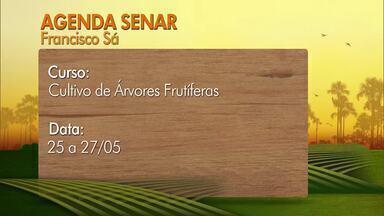 Confira os cursos oferecidos pelo Senar em parceria com os Sindicatos Rurais - De segunda a quarta-feira, é oferecido o curso de Cultivo de Árvores Frutíferas em Francisco Sá.