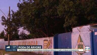 Moradores de Samambaia cobram poda de árvores - Eles dizem que fizeram o pedido ao GDF e não foram atendidos. E que bandidos subiram em árvores para roubar uma escola.