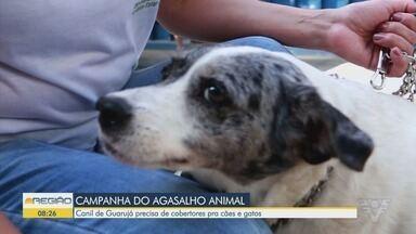 Canil de Guarujá precisa de cobertores pra cães e gatos - Vivi Vargas, coordenadora do Canil de Guarujá, explicou como é possível ajudar.