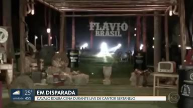 """Cavalo rouba cena e sai em disparada durante live de cantor sertanejo - Em entrevista ao DF1, Flávio Brasil riu da situação e diz que ainda não """"caiu a ficha"""" com a repercussão do episódio."""