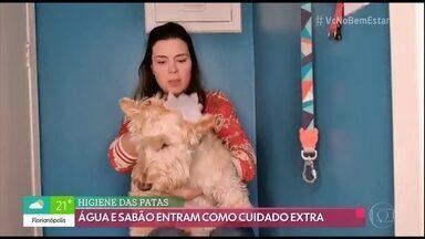Quer passear com o cachorro na rua? Veja quais cuidados tomar - Michelle Loreto mostrou como faz para passear com a cachorrinha durante a pandemia.