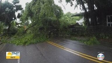 Árvore cai e interdita trecho da Avenida 17 de Agosto - Planta caiu próximo ao Árcadia de Apipucos, no Recife.